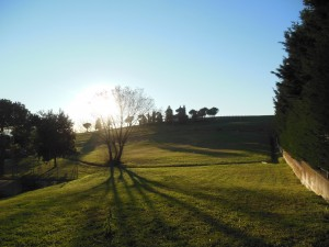 Panorama Narconon Alfiere